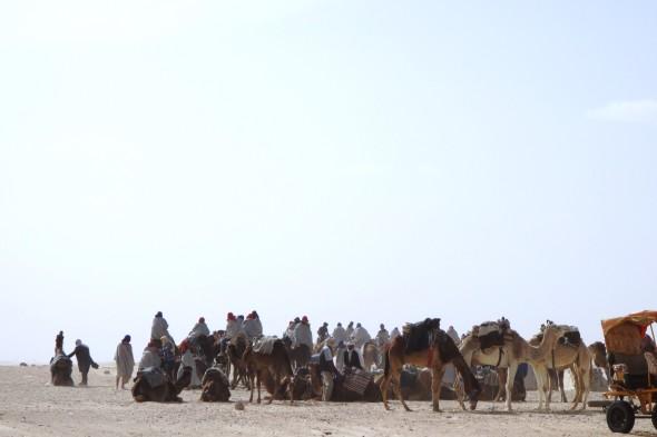 Camel Karavanserai