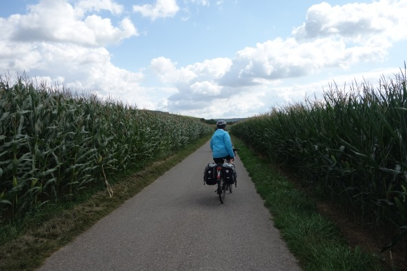 cylce path and maize